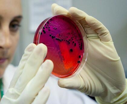 salmonellaprøve