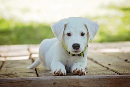 Hundevalp