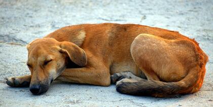 Gatehund