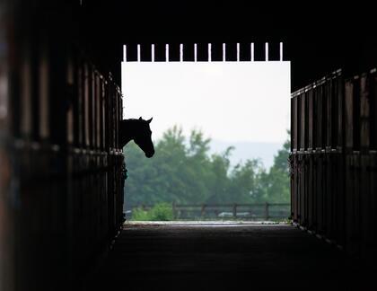Hest i stall