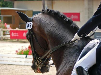 Hest på ridestevne