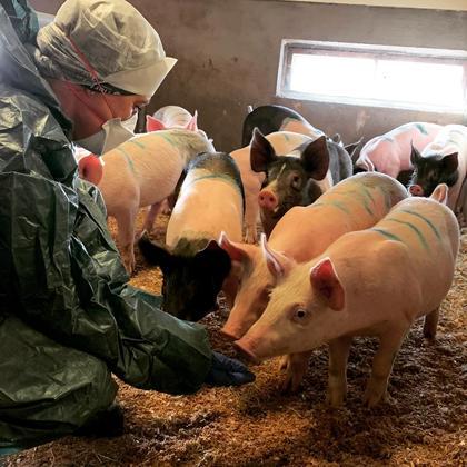 Beskyttelsesutstyr til besøk i grisebesetning