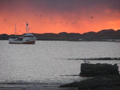 Fiskebåt i Lofoten