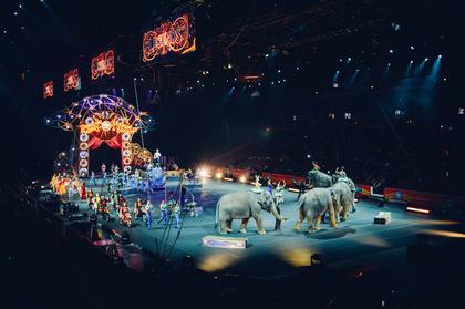 sirkuselefanter