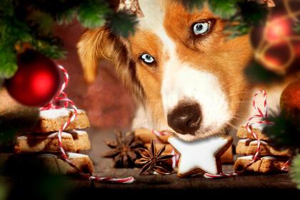 Hund og julemat
