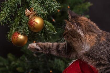 katt og juletre