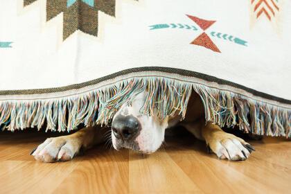 Hund som gjemmer seg
